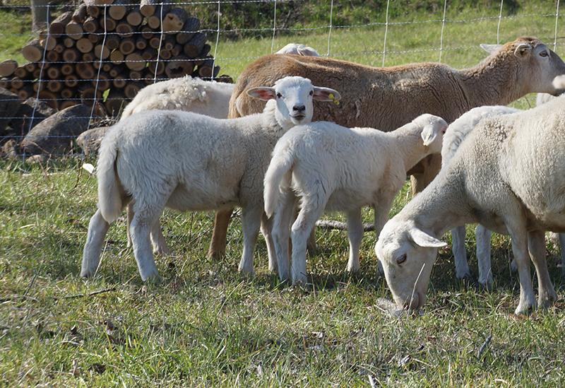 Lowland Farm Grass Fed Beef