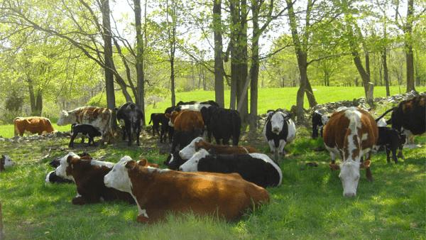 Lowland Farm