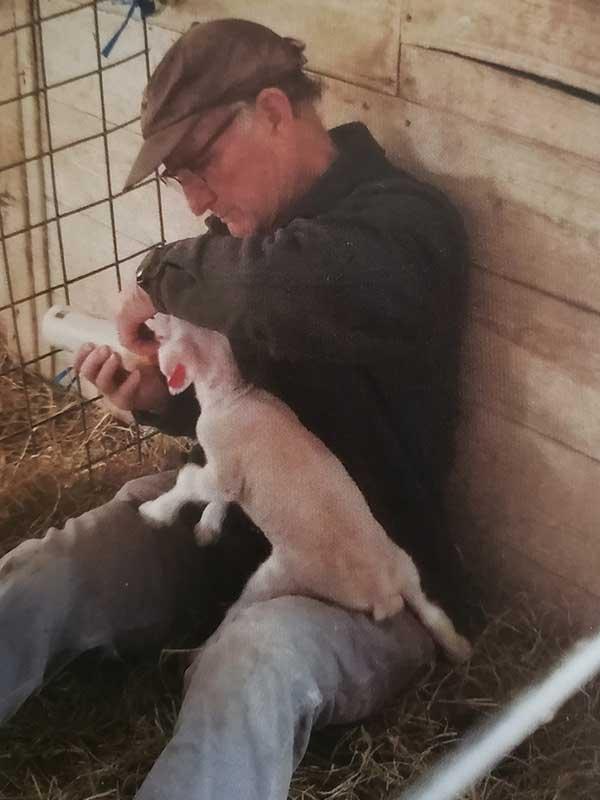 Lambing at Lowland Farm